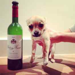 My dog Kiwi posing with the 2005 chateau Musar #love this #wine and #dog