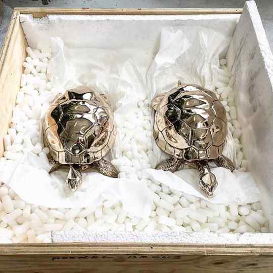 Anyone wants a box of turtles?   