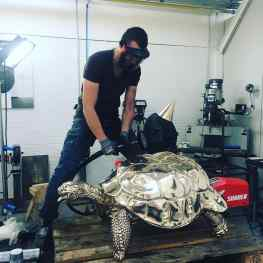 Who wants some F*ckig turtles? 🐢🐢 #josephklibansky #contemporaryart #jeffkoons #damienhirst